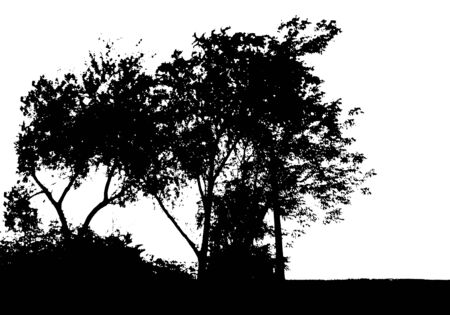 Black tree silhouette. Card with copy space. Isolated on white background. Vector nature illustration for your design Ilustração