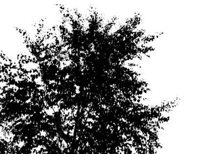 Black tree silhouette. Card with copy space. Isolated on white background. Vector nature illustration Ilustração