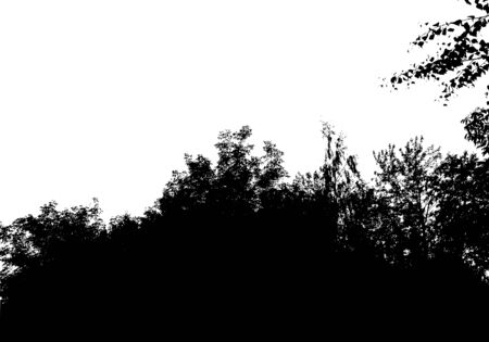Black tree forest silhouette. Card with copy space. Isolated on white background. Vector nature illustration for your design