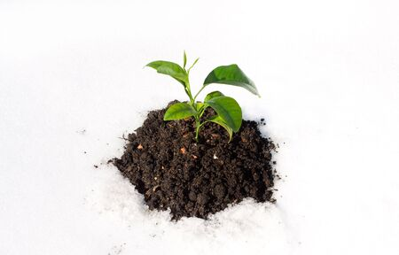 plant growing on white snow