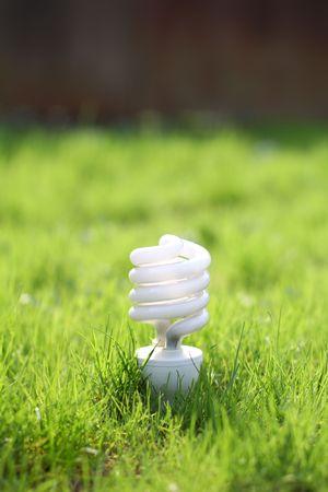 light bulb on a grass