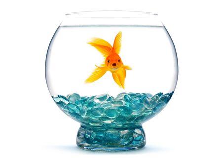 Goldfish in aquarium on white background photo