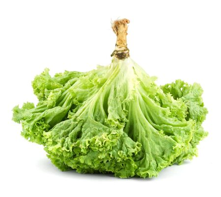nonfat: Green butter Lettuce isolated on white background Stock Photo