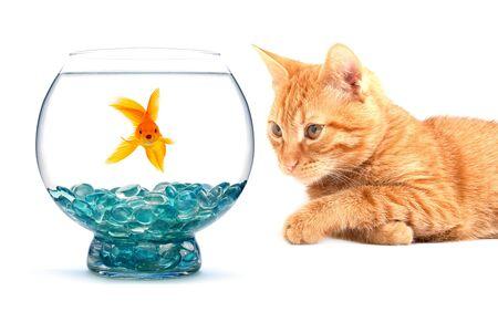 gato jugando: Gato jugando con peces dorados aislados sobre fondo blanco