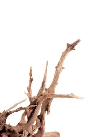 snag: Dry dead snag isolated on white background Stock Photo
