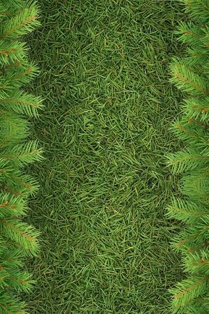 Christmas spruce  texture. Shot in a studio photo