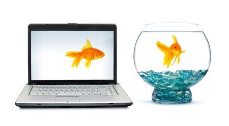 Goldfish in aquarium on a white background Stock Photo - 6064322