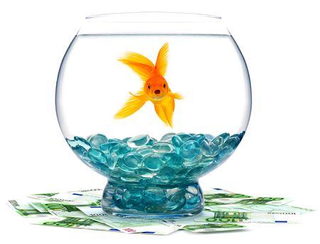 Goldfish in aquarium on a white background photo