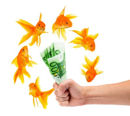 Goldfish with money on a white background photo