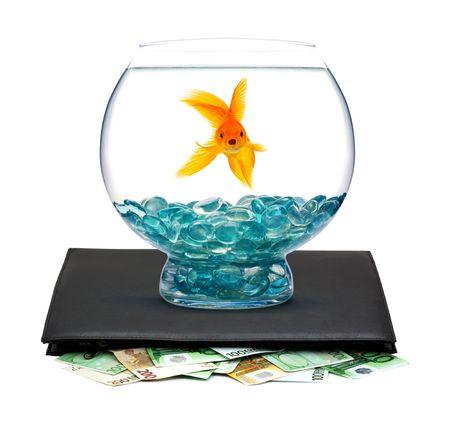 Goldfish in aquarium with money on a white background photo