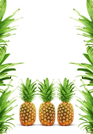 Ripe pineapple isolated on a white background Stock Photo - 6358426