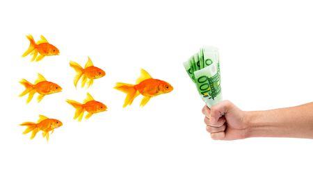 Goldfish with money on a white background Stock Photo - 6379700