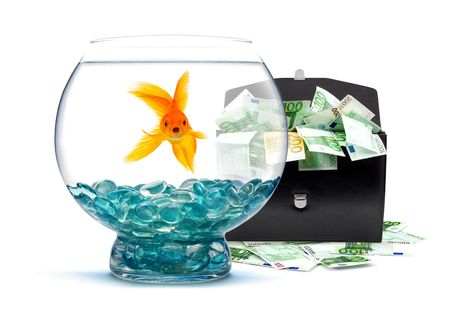 Goldfish in aquarium with money on a white background Stock Photo - 6496270