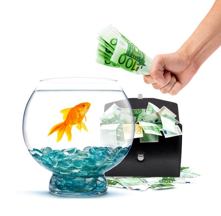 Goldfish in aquarium with money on a white background photo