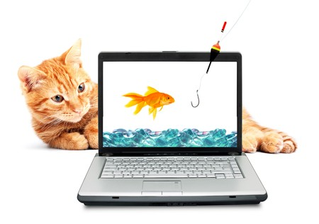 Goldfish, cat, laptop isolated on white background photo