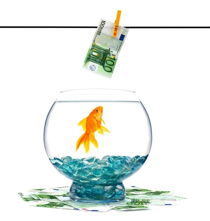 Goldfish in aquarium on a white background Stock Photo