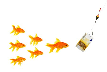 Goldfishes and money on a white background photo