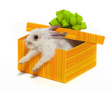 The rabbit in the yellow box with ribbon Stock Photo - 7853327