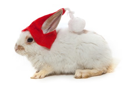 Rabbit and red hat isolated on white background photo