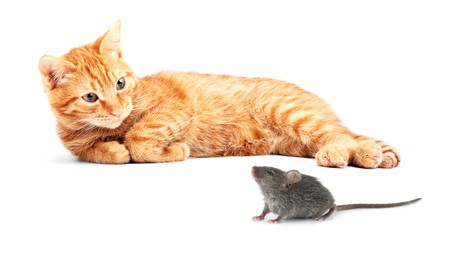 Mouse and cat isolated on white background photo