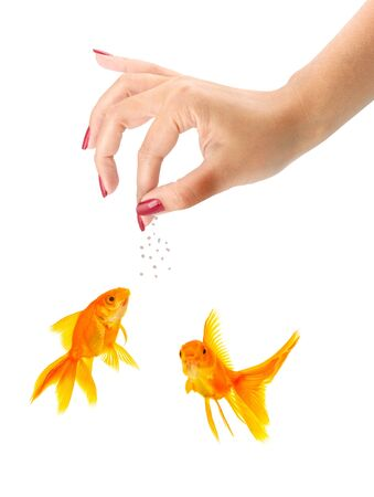 Woman feeding goldfishes isolated on a white background Stock Photo - 7998299
