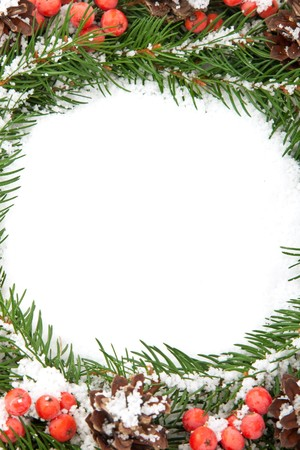 hollyberry: Christmas green  framework with snow  and holly berry  isolated on white background