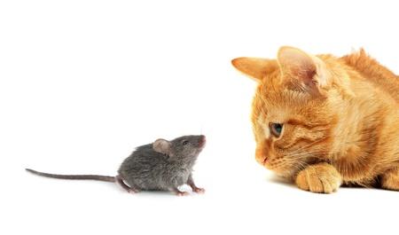 raton: Rat�n y el gato, aisladas sobre fondo blanco Foto de archivo