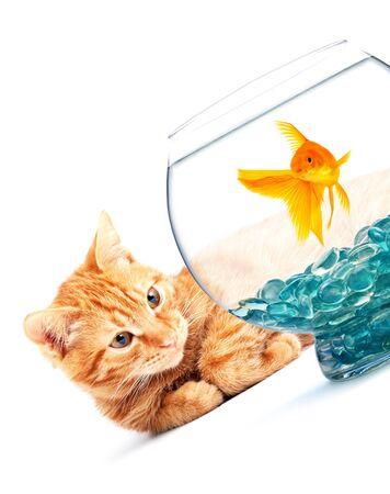 Cat playing with goldfish isolated on white background photo