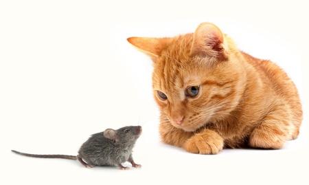 gato jugando: Rat�n y el gato aislados en fondo blanco