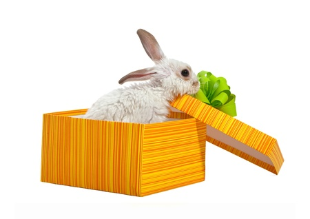 The rabbit in the yellow box with ribbon Stock Photo - 9116616