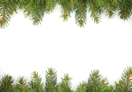 branche pin: Cadre de No?l vert isol? sur fond blanc Banque d'images