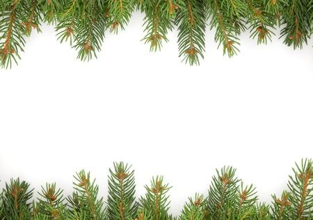 evergreen branch: Navidad marco verde aislado sobre fondo blanco