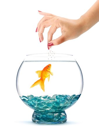 Goldfish in aquarium  isolated on a white background