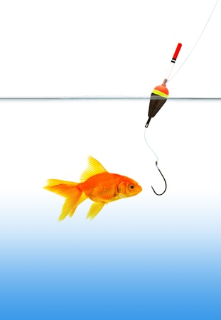 Fishing a goldfish. Shot in a studio Stock Photo - 10655160