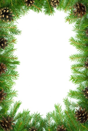 fir cones: Christmas green  framework isolated on white background