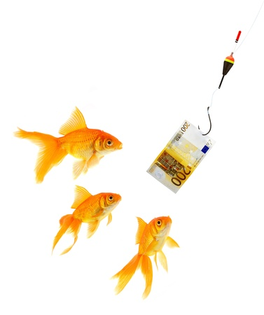 laundering: Goldfish in aquarium on white background