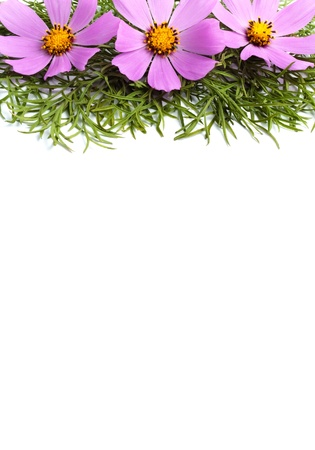 Flowers with leaves isolated on white background
