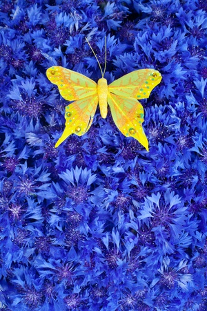 garden cornflowers: Spring flowers blue cornflower with yellow butterfly wallpaper backdrop Stock Photo