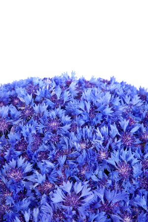 Beautiful spring flowers blue cornflower on background. Blue flowers pattern photo