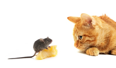 hunter playful: Mouse and cat isolated on white background