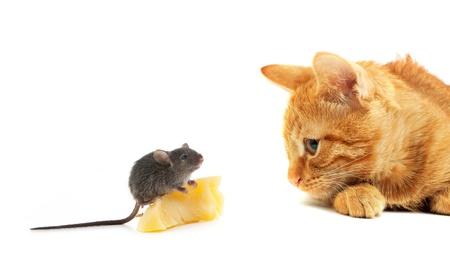 gato jugando: Rat�n y el gato aislado sobre fondo blanco Foto de archivo