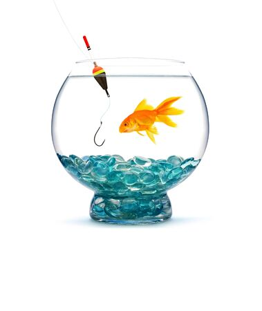 Goldfish in aquarium on white background Stock Photo - 14472160