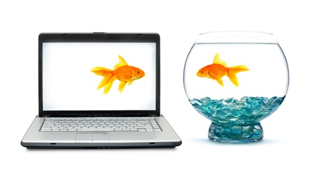 Goldfish in aquarium on a white background photo