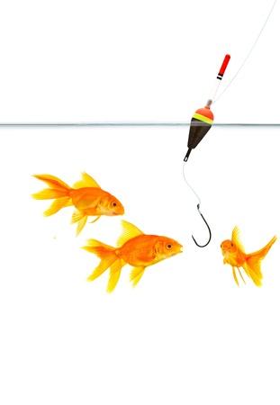 Fishing a goldfish. Shot in a studio Stock Photo - 14472125