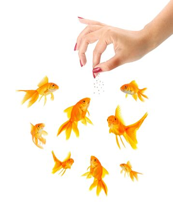 to attract: Woman feeding goldfishes isolated on a white background
