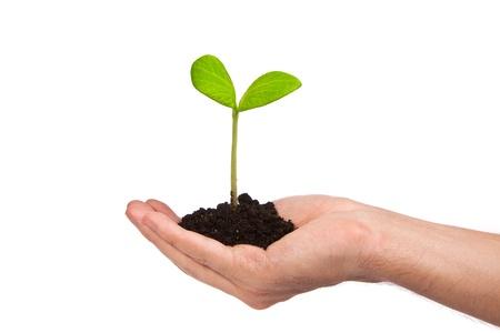 Mannelijke hand houdt een kleine spruit en een aarde handvol geïsoleerd op een witte achtergrond