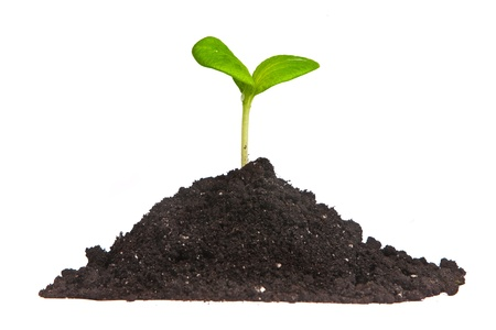 Heap dirt with a green plant sprout isolated on white background photo