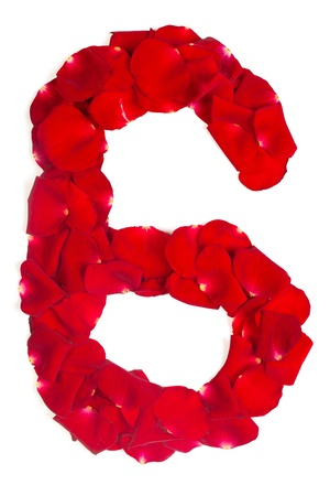 Alphabet number 6 made from red petals rose isolated on a white background photo