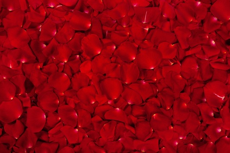 Background of  beautiful red rose petals photo