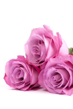 Three fresh pink roses isolated on a white background photo